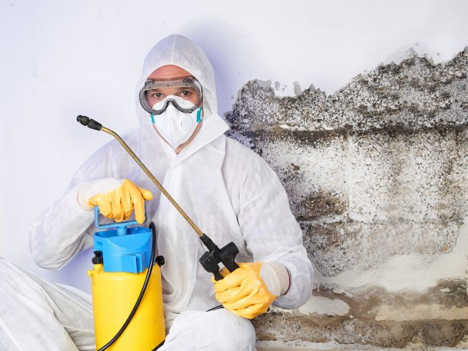 When Is Professional Mold Removal Necessary